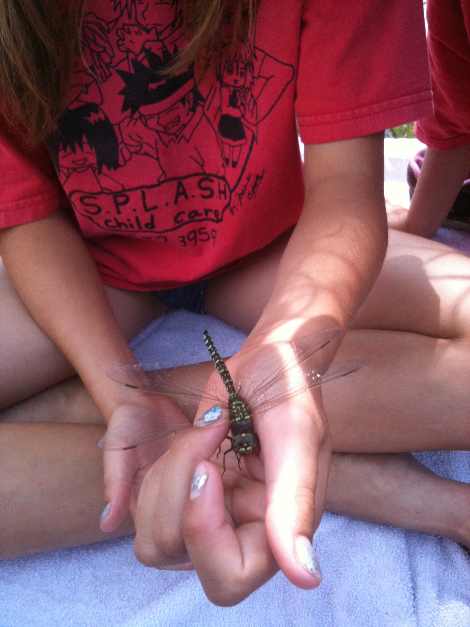 Child holding dragonfly